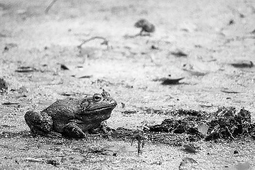 Jason Smith - Bull Frog