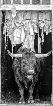 Dan Traun - Bull Jeans