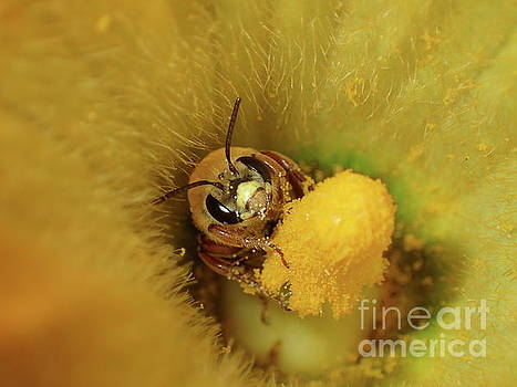 Busy Bee 2 by Diane Friend