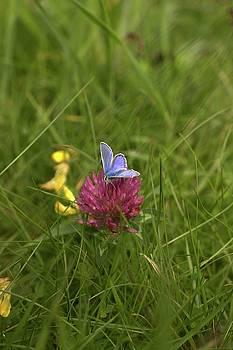 Butterfly 2 by Alexa Gurney