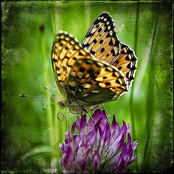 Ingrid Smith-Johnsen - butterfly 2