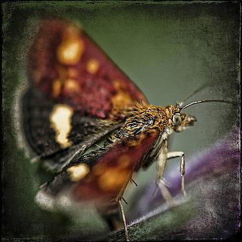 Ingrid Smith-Johnsen - butterfly 3
