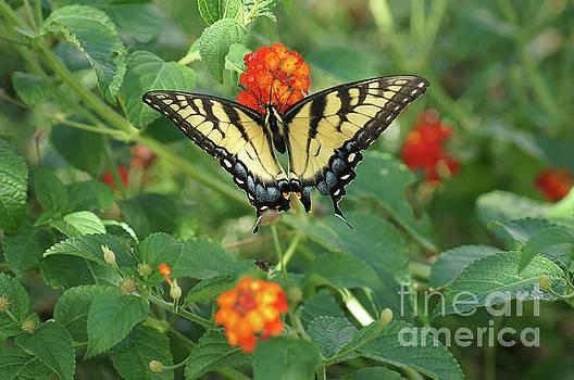 Butterfly and Flower by Debra Crank