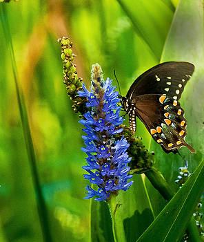 Butterfly in the Garden by George Lovelace