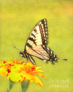 Butterfly by Marion Johnson