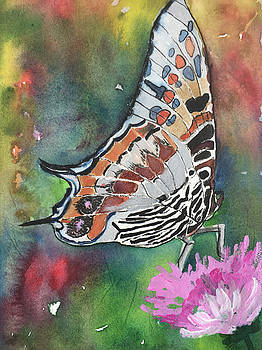 Butterfly  by Marita McVeigh
