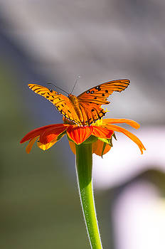 Butterfly on Flower by Willard Killough III