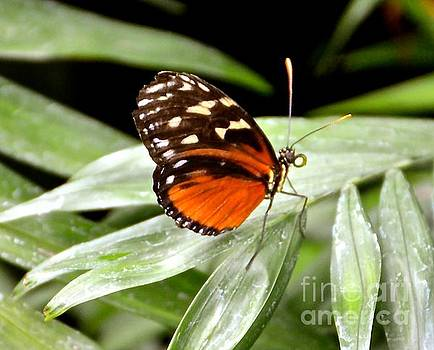Butterfly Wings by Stephanie  Bland