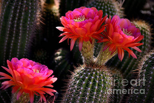 Sonoran Spring by Deb Halloran