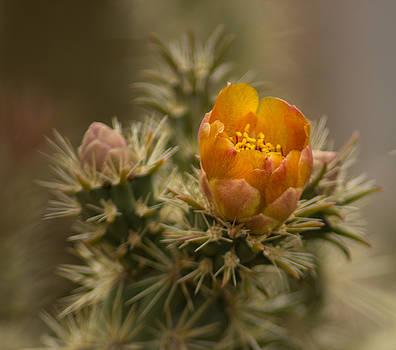 Cactus Bloom by Valerie Loop