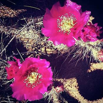 #cactus #pricklypear by Gayle Faucette Wisbon