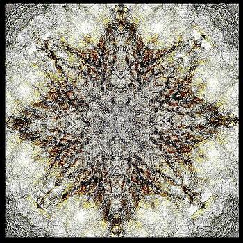 Cactus skin by Jesus Nicolas Castanon