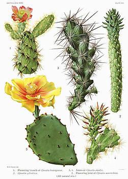 Ramneek Narang - Cactus Vintage Print