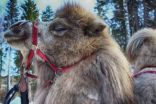 Camel by Tatiana Tyumeneva
