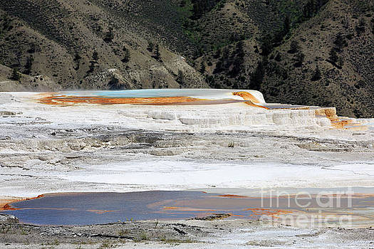 Canary Spring at Mammoth Hot Springs Upper Terraces by Louise Heusinkveld