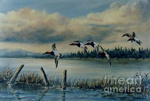 Canvasbacks Over Lake Earl by Lynne Parker