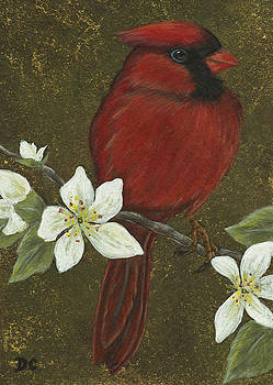 Cardinal by Deborah Collier