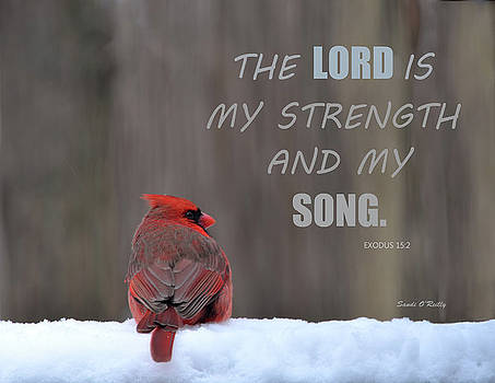 Cardinal In The Snowstorm With Scripture by Sandi OReilly