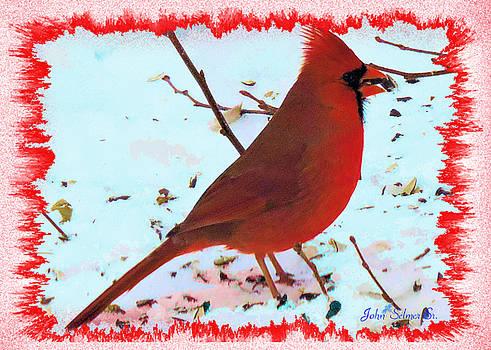 Cardinal by John Selmer Sr