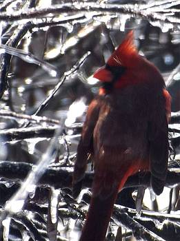 Cardinal on Ice by Colette Merrill