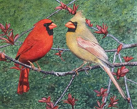 Cardinals by Sharon Farber