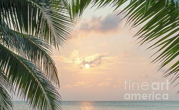 Tim Hester - Caribbean Sunrise Palms Background