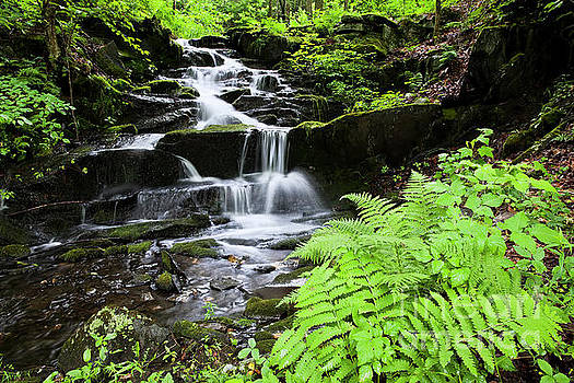 Cascading Woodland Brook by Alan L Graham
