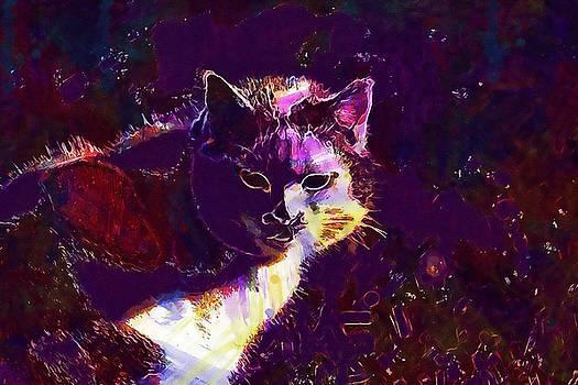 Cat Meadow Domestic Cat Mieze  by PixBreak Art