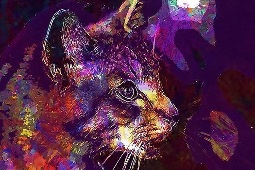 Cat Mieze Tiger Cat Breed Cat  by PixBreak Art
