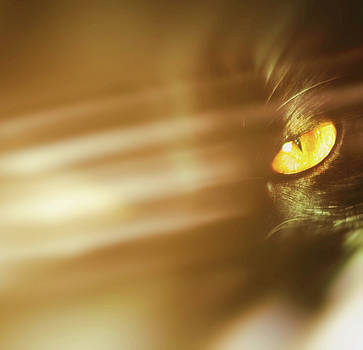 Cats eye by Frances Lewis