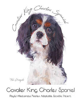 Cavalier King Charles Spaniel Poster by Tim Wemple