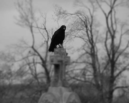 Gothicrow Images - Cemetery Blackbird In Black And White