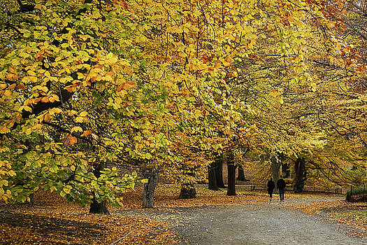 Central Park Gold by Cornelis Verwaal