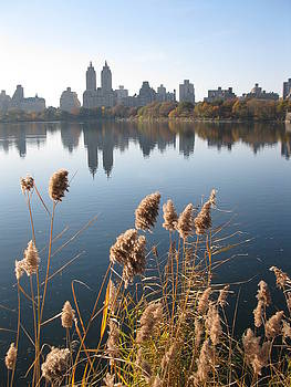 Central Park by Yannick Guerin
