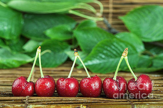 Cherries and branch with leaves by Deyan Georgiev