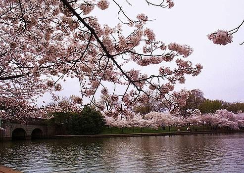 Cherry Blossom Bridge by Joyce Kimble Smith