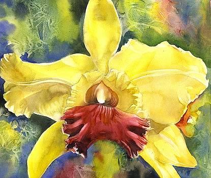 Alfred Ng - Christmas Orchid