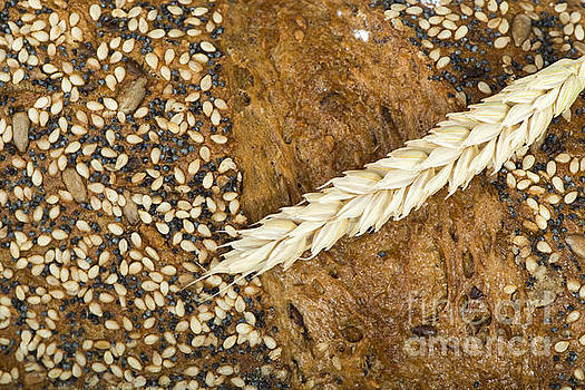 Close up Bread and wheat cereal crops by Deyan Georgiev