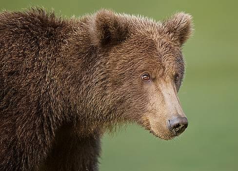 Coastal Brown Bear by Brian Magnier