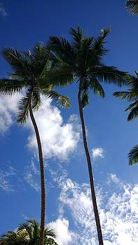 Coconut Trees by Sheryl Chapman Photography
