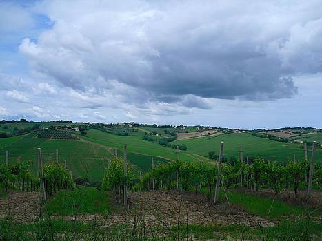 Colline e vigne by Alberto V  Donati