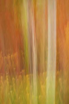 Rick Strobaugh - Colors in Motion