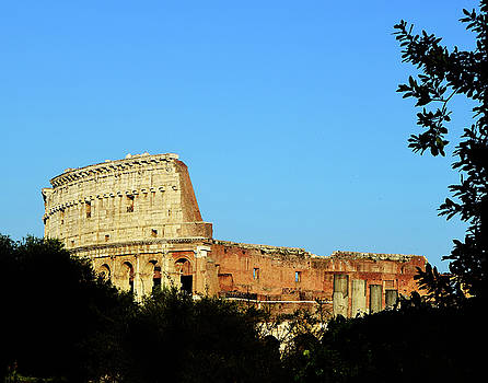 Colosseum through Foliage by Tim Stringer