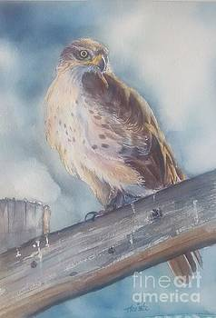 Coopers Hawk by Patricia Pushaw