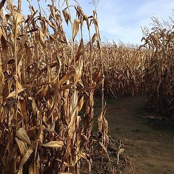 Corn Maze by Heidi Moss