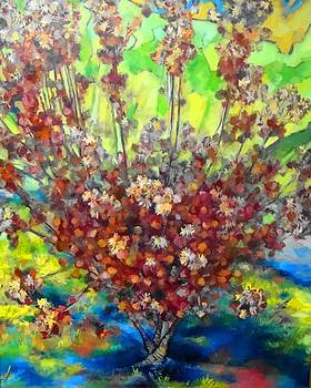 Cotinus Coggygria by Kevin Davidson