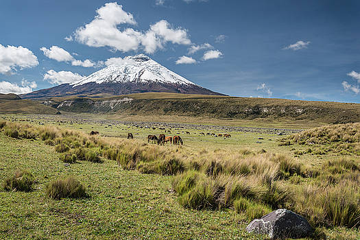 Cotopaxi volcano and wild horses by Henri Leduc