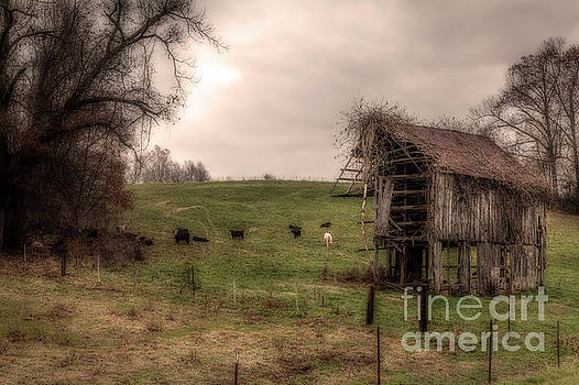 Larry Braun - Cows in a Field by a Barn
