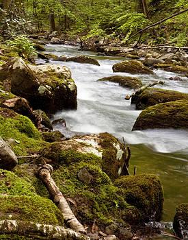 Creekside by Cindy Adams
