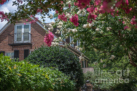 Dale Powell - Crepe Myrtle Blooming